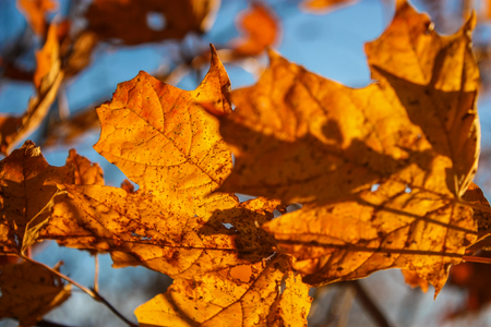 golden leafs in a tree