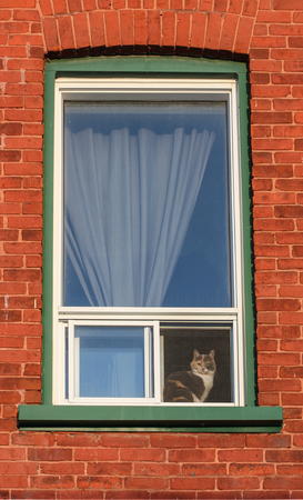 cat sitting in a window Stock Photo