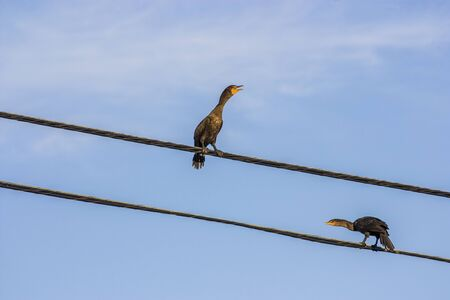 2 birds on a wire Stock Photo