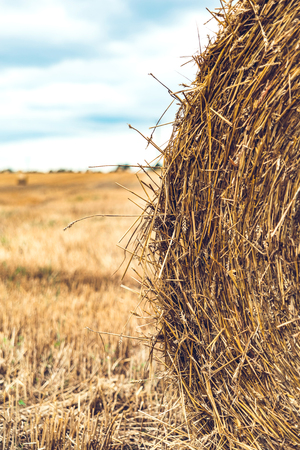 hayroll: Hay bale on the field Stock Photo