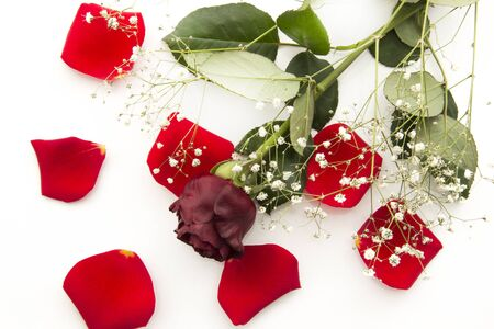 flyaway: Happy Valentines day. Red rose among the rose leafs