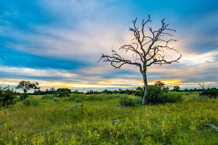 Botswana landscape view of trees and sky ready to rain at Kalahari desert, southern Africa. Banco de Imagens