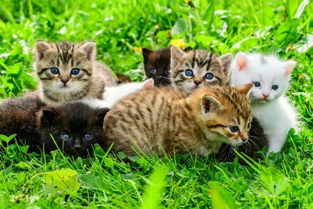 Groep kleine kittens in het gras