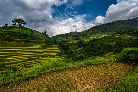 Mu Cang Chai, landscape terraced rice field near Sapa, northern Vietnam