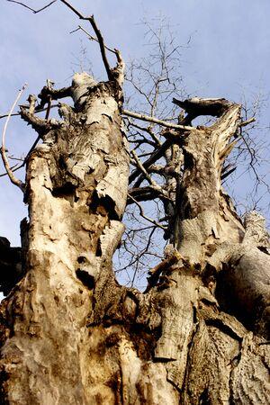 arboles secos: árboles muertos