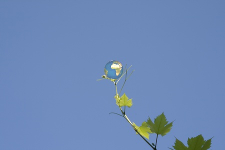 globe on vine leaf photo