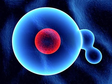 water molecule: mol�cula de agua