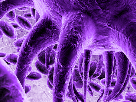 purple bacteria Stock Photo