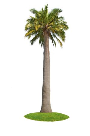 Green palm on a white background Stock Photo - 6922022