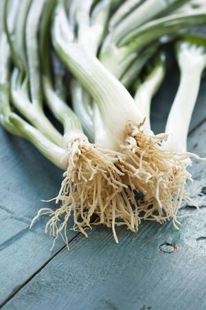 scallion: Green onion on vintage table Stock Photo