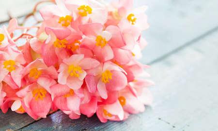 begonia: Pink begonia on wooden background