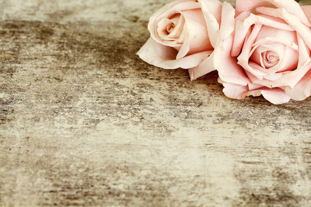Two pink roses on wooden background