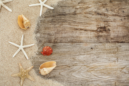 shell: Sea shell on wooden with sand