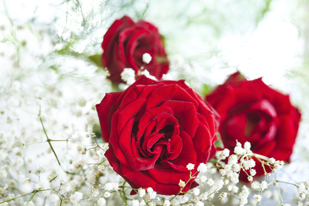 red flower: Red roses on white background