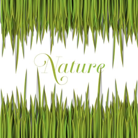 Grass eco vector Stock Vector - 17898687