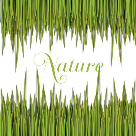 Grass eco vector Stock Vector - 17898687