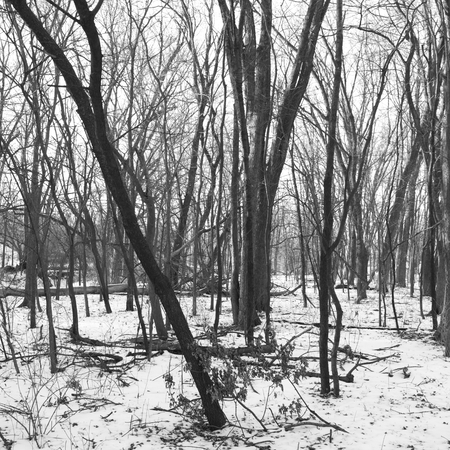 Black and White Willow Creek Park in Winter Fashion Stock Photo