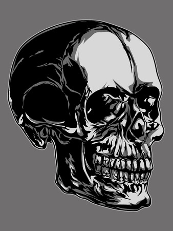 syndicate: The Second Syndicate Skull Stock Photo