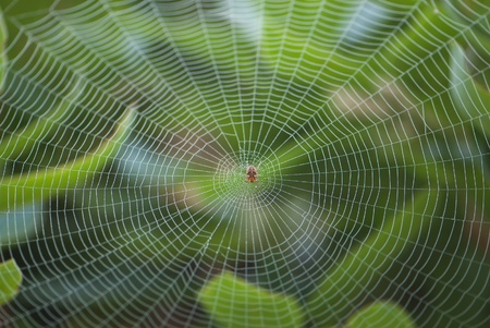 spider web: Spider resting in center of large symmetrical cobweb