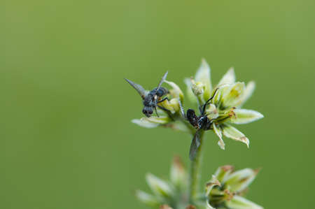 cling: Two dead flies cling to green plant