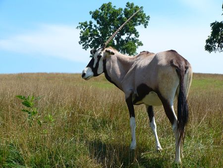 Real unicorn