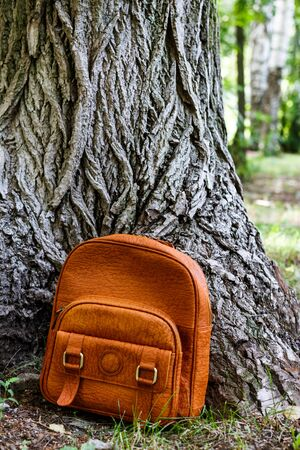 huge: backpack on the background of the huge old tree in the park