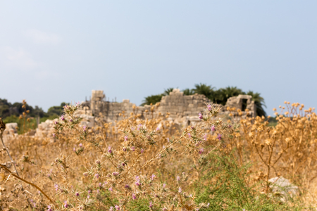 Color spines on the background of the ruins of Patara