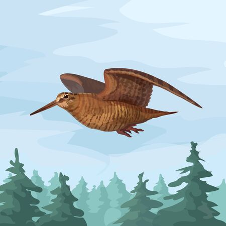 Realistic wooscock isolated in forest sandpiper flying forest bird vector animal Illustration