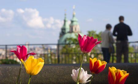 religiosity: tulip and prague