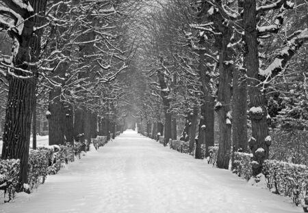 schonbrunn palace: Vienna - live fence from gardens of Schonbrunn palace in winter