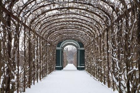 schonbrunn palace: Vienna - roses busch from gardens of Schonbrunn palace in winter