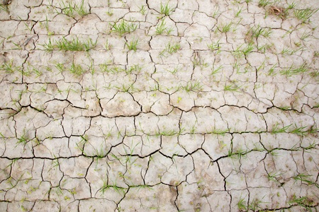 dearth: dirt on the corn field - detail Stock Photo