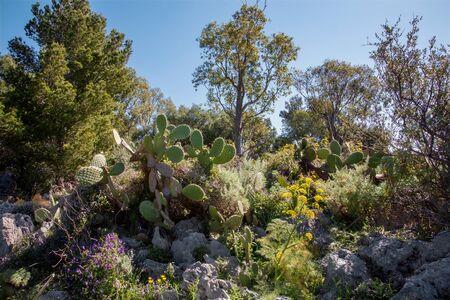 mediterranean forest: Sicily - Mediterranean flora Stock Photo