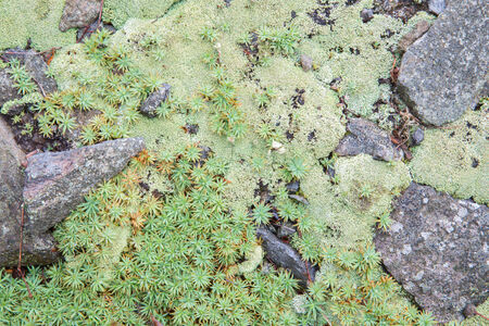 moos: moos and lichen - background