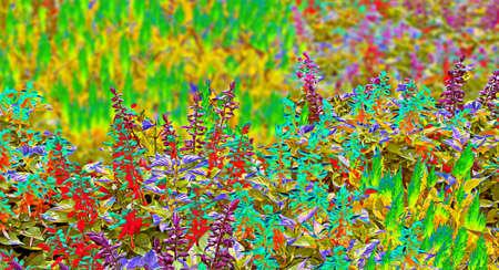ridge: digital art  flowerbed