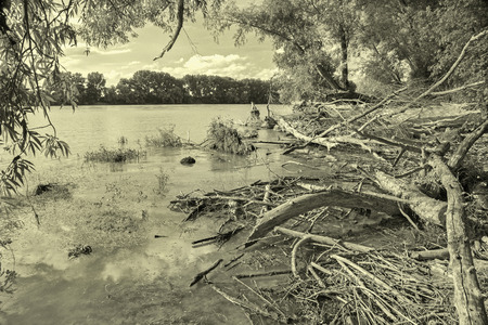 alluvial: Alluvial wood on the waterfront of Danube in National park  Donau-Auen in Austria. Stock Photo