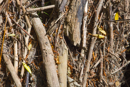 alluvial: alluvial wood - background