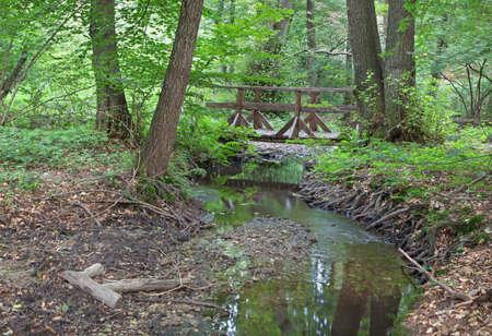 alluvial: creek in forest of Little Carpathian - Slovakia