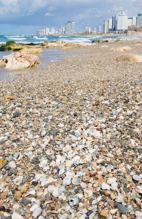 tel: TEL AVIV, ISRAEL - MARCH 2, 2015: The mussels on the coast of Tel Aviv