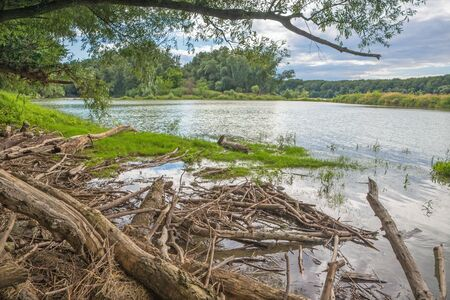 alluvial: Alluvial forest on the waterfront of Danube in National park Donau-Auen in Austria. Stock Photo