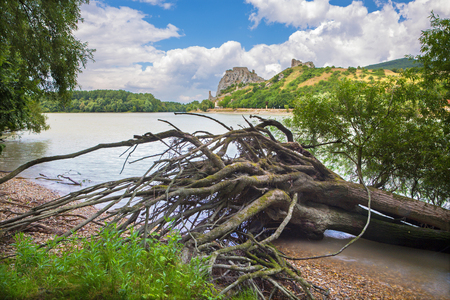alluvial: The ruins of Devin castle near Bratislava over the Danube river and the drift wood
