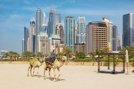 DUBAI, UAE - MARCH 28, 2017: The Marina towers and the camels on the beach.