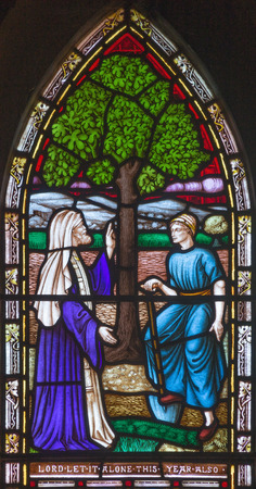 LONDON, GREAT BRITAIN - SEPTEMBER 19, 2017: The parable of the Fig tree on the stained glass in St Mary Abbots church on Kensington High Street.