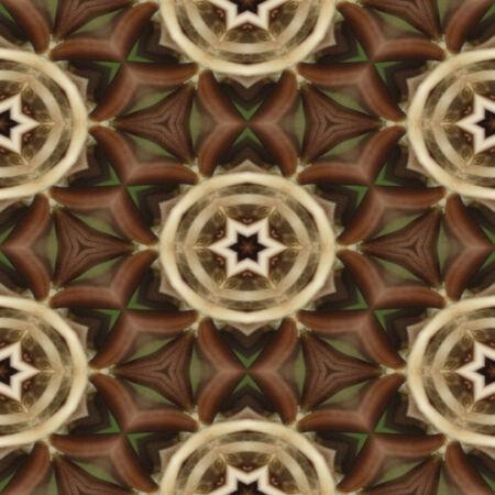 Brown stars photo