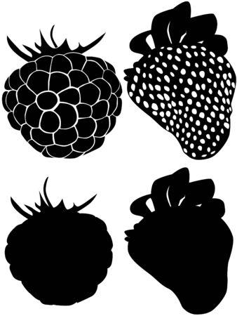 siluet: On this picture are silhouettes raspberry and strawberry.