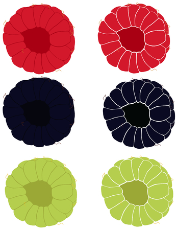 riped: On this picture are two maturely raspberries, two riped blackberries and unriped berries.