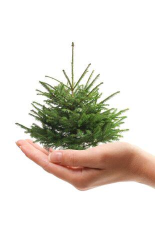 Hand holding christmas tree isolated over vhite