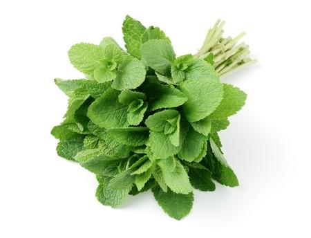 Fresh herb spearmint bunch
