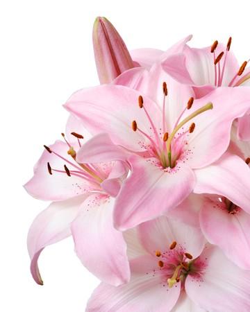 giglio: Bouquet di freschi rosa gigli isolata on white  Archivio Fotografico