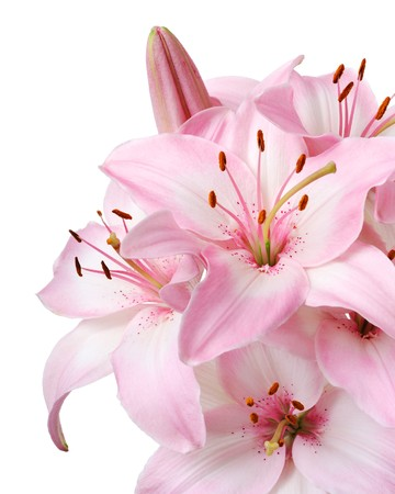 lily flowers: Ramo de lirios rosados frescos, aislados en blanco